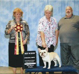 Best in Show French bulldog